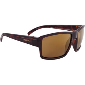 Alpina Melow - Gafas ciclismo - marrón